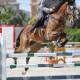 Cavallo C V. Tangelo